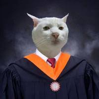 Cat in Graduation Gown